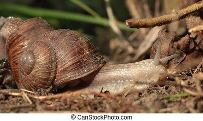 Snails make love