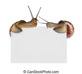 Snails on empty poster isolated on white