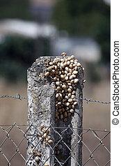 Snails on the pillar