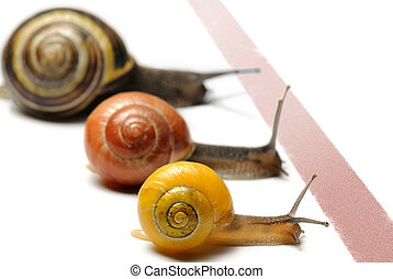 Snails racing - Three snails racing towards red finish line
