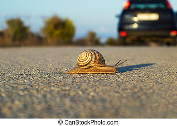 Snail\'s step