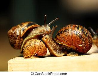 Snails.