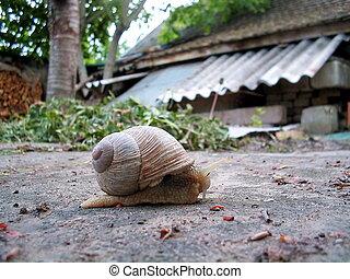 snailtrail-expres