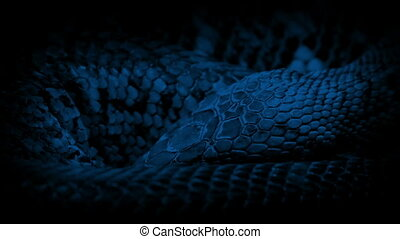 Closeup of scaly snake body breathing slowly in the dark