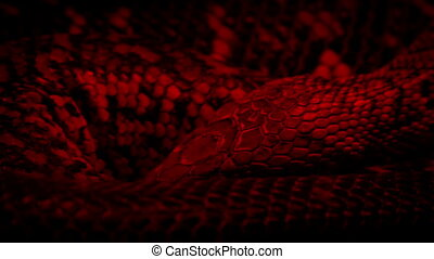 Snake Coiled Up Under Heat Lamp - Closeup of snake coiled up...