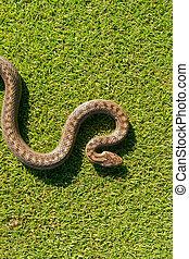 Snake curves