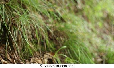Snake Den - Pan shot to a snake den between leaf and soil,...
