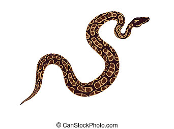 snake - abstract image of a snake