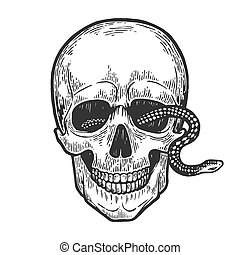 Snake in human skull engraving vector illustration. Scratch board style imitation. Black and white hand drawn image.