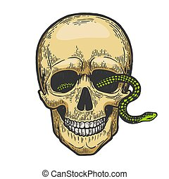 Snake in human skull sketch color engraving vector illustration. Scratch board style imitation. Black and white hand drawn image.