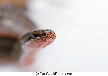 Snake looking at the camera