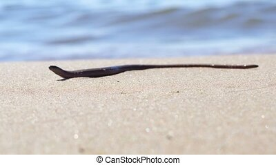 Snake on sandy beach