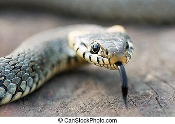 snake on wood stump closeup