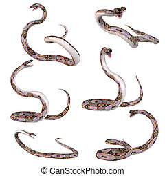 Snake-Reticulated Python - 3D Render of an Snake-Reticulated...
