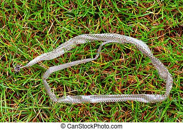 slough of grass-snake lies on the grass