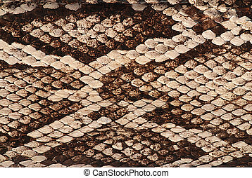 Snake skin - Detail of a real skin of a snake with scales...