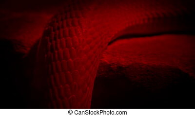 Snake Slithers In Heat Lamp Snake body moving over ledge...