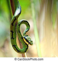Snake - snake in green grass