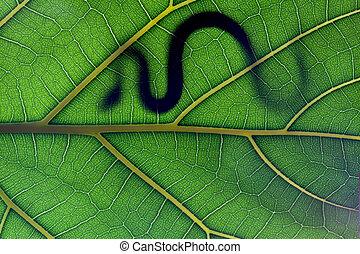 Snake stay on leaf in backlight