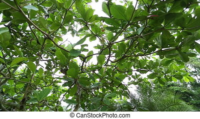 Snake Wood Canopy, Tropical Rainforest, Costa Rica -...