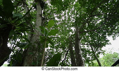 Snake Wood Tree Canopy | Rainforest, Costa Rica - Medium...