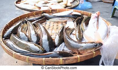 Snakehead alive fish at street food market - Snakehead alive...