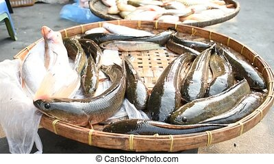 Snakehead alive fish at morning market in Thailand