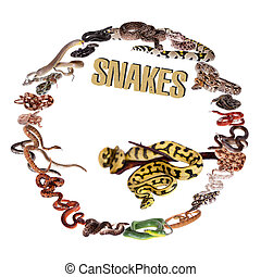 Snakes circle set on white