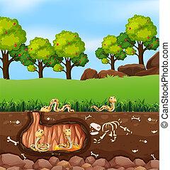 Snakes living in underground