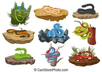 Snakes, serpents, python, black mamba