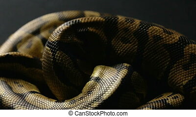 Snakeskin pattern in shadow - Footage of royal ball python...