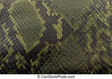 Snakeskin texture - close-up