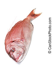 snapper red fish isolated on white