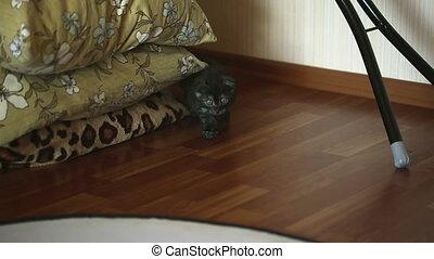 Sneaking kitten.