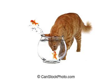 sneaky, gato, com, seu, cabeça, dentro, um, bacia peixes