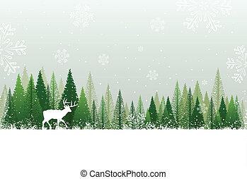 snedækkede, skov, baggrund, vinter