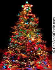 sneeuw bedekte, kerstboom, met, multi kleurig, lichten