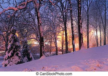 sneeuw, op, bomen, en, stadslichten