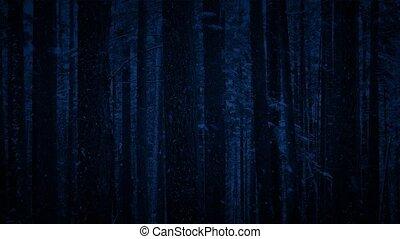 sneeuwval, in, bos, op de avond, -, looped