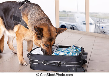 Sniffing dog at the airport