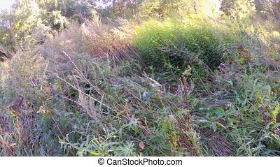 sniper with a gun camouflaged