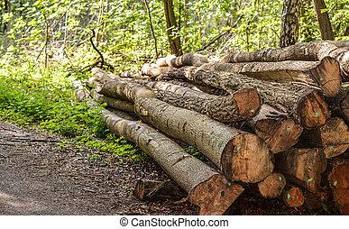 snitt, träd, loggar, märkt