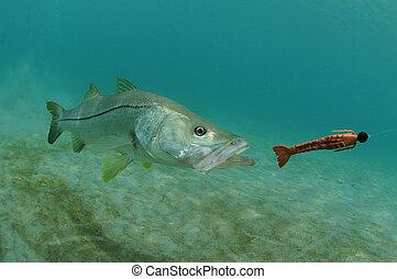 snook, señuelo, perseguir, pez, océano