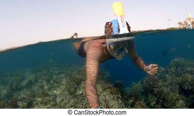 Snorkel swim split view, Red Sea, Egypt - Snorkel swim in...
