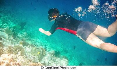 Snorkeler diving swimming under wat