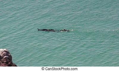 Snorkeler in Turquoise Ocean Water