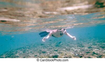 snorkeler, tauchen