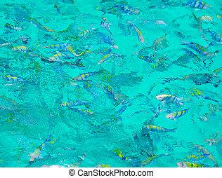 snorkeling, 在, the, 公海