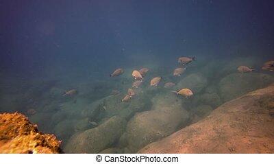 snorkeling, 3840x2160, fish., bas-fond, vidéo, rocheux, touriste