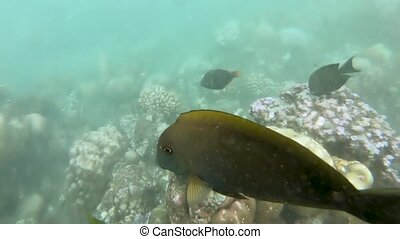 Snorkeling around the coral reefs with tropical fishes
